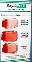 Grupos sanguíneos caninos y transfusiones de sangre. (5/6)