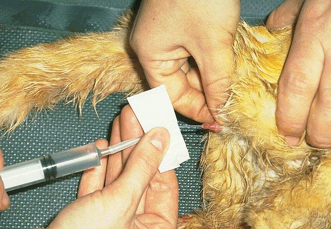 Uretrostomia: cuando la obstrucción urinaria se repite. (5/6)