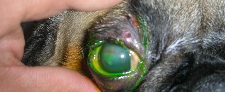 Otra imagen del ojo de Muffin.