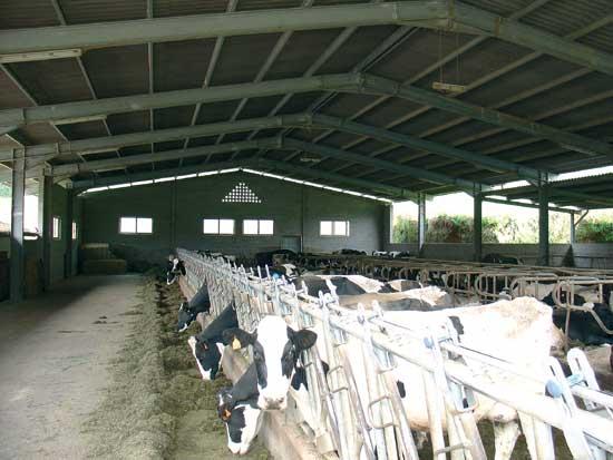 ¿Por qué las vacas producen leche? (4/6)