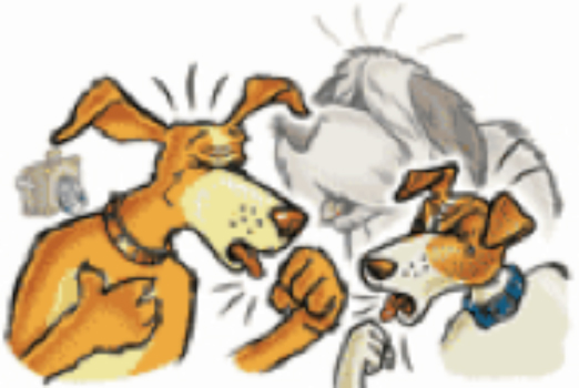 La tos de las perreras o rinotraqueitis infecciosa canina. (3/6)