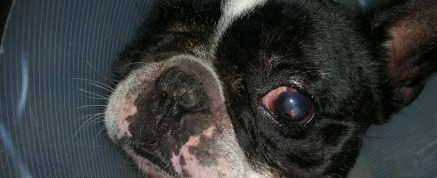 fotos blogs 215