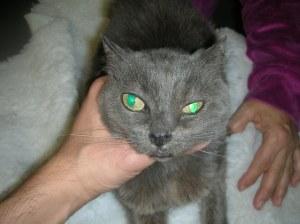 Nasal mas in a FelV positive kitty.
