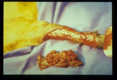 Imagen extremidad perro tras extirpación tumor cutáneo