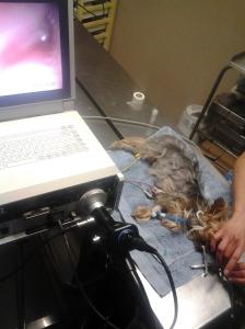 La endoscopia de Kissy: el monitor y el endoscopio.