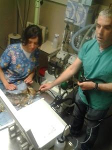 Iris y Maurici Batalla realizan una endoscopia a Kissy.
