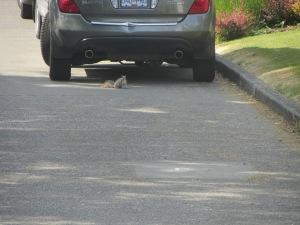 Una ardilla corriendo por la calle
