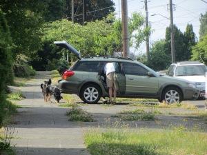 Perros preparados para una excursión en coche.