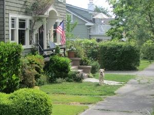 Perro junto a su casa, haciendo su trabajo de guardián.