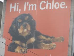 Hi, I am Chloe. Anuncio de un edificio de apartamentos con este nombre.