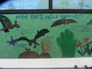 How bats help humans.