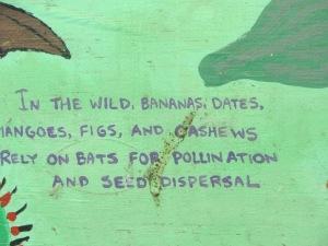 How bats help humans