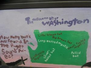 Most common bats of Washington.