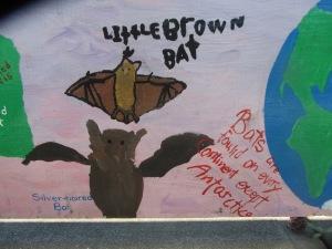 Types of bats: little brown bat.