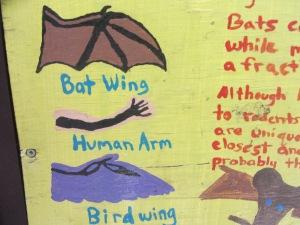Bat wings.