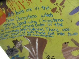 Bats are in the order Chiroptera.