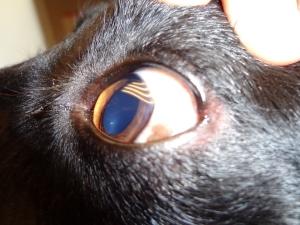El ojo izquierdo de Duna, normal.