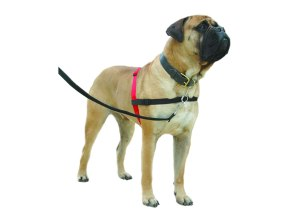 halti_harness_photo_large606