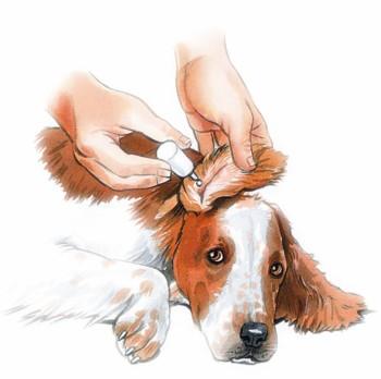 Resultado de imagen para administración via tópica en animales