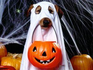 hallowen-traje-disfraz-perro-disfraces