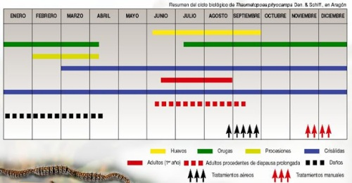 ciclo biologico procesionaria del pino