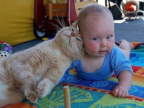 Gatos y bebés. (2/4)