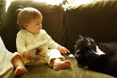 Gatos y bebés. (1/4)