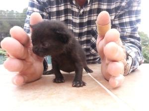 Comportamiento y desarrollo de cachorros y gatitos jóvenes. Blog Historias Veterinarias 20140518_160407
