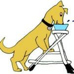 tratamiento-no-quirc3bargico-perros-con-mega-esc3b3fago