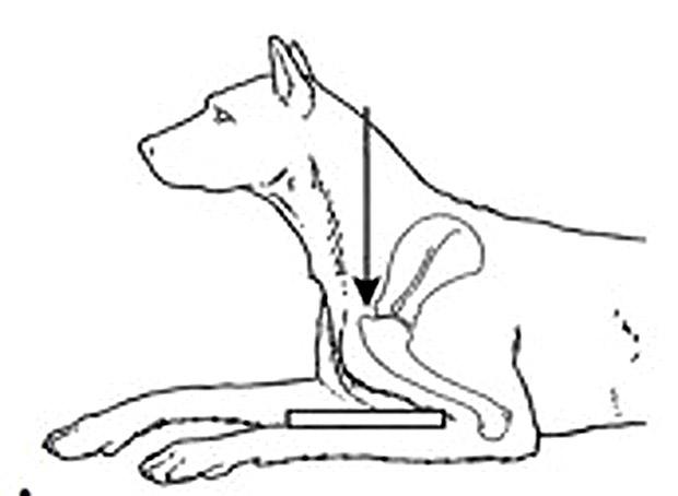 tenosinovitis bicipital diabetes canina
