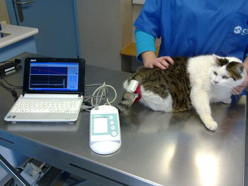 Los gatos de interior también padecen enfermedades (4/4)