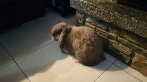 cuscus1