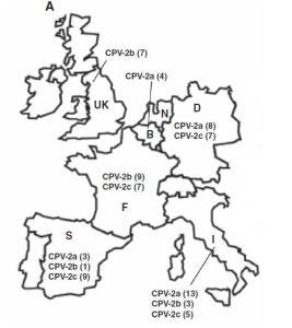 Cepas de Parvovirus Canino en los distintos países (entre paréntesis el nº de muestras de cada una).