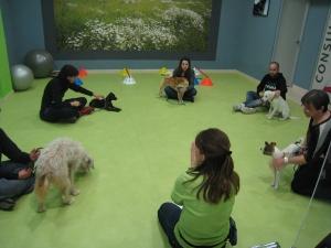 clases-cachorros-zaragoza-canina-enero-13-3