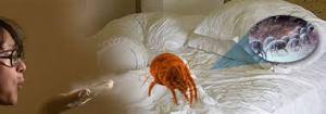 Uno de los lugares en que hay más ácaros del polvo de casa: las camas.
