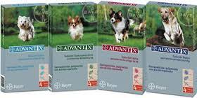 Pipetas Advantix para tratar y preventir la infestación por pulgas en el perro.