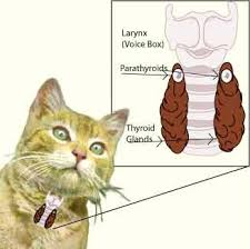glándula tiroides -www.laguiago.com